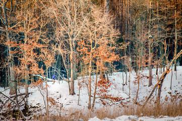 Skier - Cross County Trail