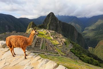 Llama standing at Machu Picchu overlook in Peru