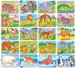 Set of cute animals. Rhino, monkey, elephant, crocodile, kangaroo, lion, giraffe, hippo, birds, zebra, tiger, camel, bears, fox, wolf, penguin, seal, walrus