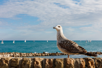 Mouette, Antibes, France