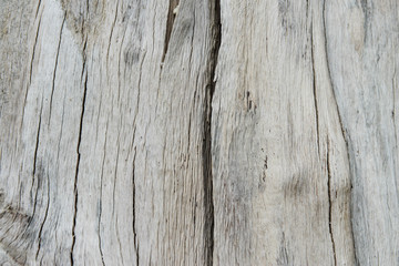 Texture of wood from dead tree