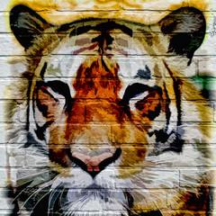 Art urbain, Tigre