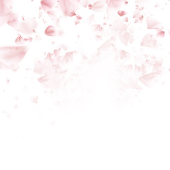 Sakura flying petals on dark background. EPS 10