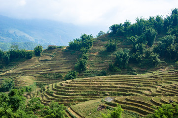 rizières en terrasse - Sa Pa - Vietnam