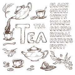 vector sketch of items for the tea ceremony. Teapot and cups, lemon. The names the different varieties drawn font