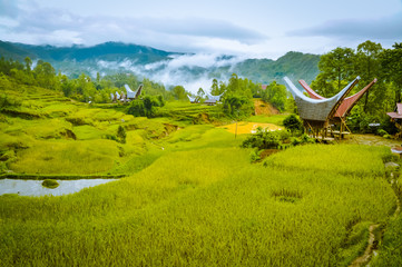 Morning fog in Toraja