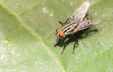 Fly on green leaf.