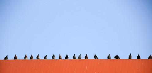 Doves in urban scene photograph