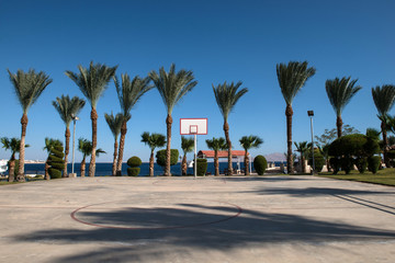 basketball backboard in the palms