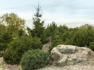 Pine tree in autumn park