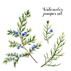 Watercolor juniper set. Hand painted evergreen branch with berries on white background. Botanical illustration for design or print.