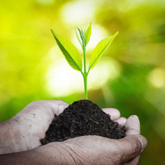 Human hand holding fresh small plant with soil on green nature blurred background