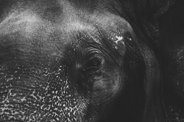 page elephant