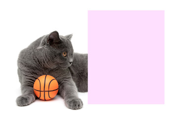 gray cat with a ball lying near a banner