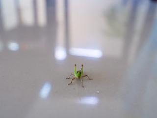 Grasshopper on The House Floor
