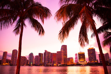 Wall Mural - Miami Florida skyline and bay at sunset through two palm trees.