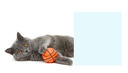 cat with a ball lying near a banner