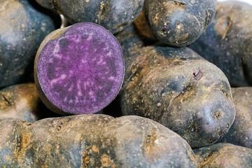 Kartoffeln der Sorte Vitelotte auf einem Tisch