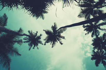 Palm trees on tropical beach over the sky with copy space, vintage toned and retro color stylized