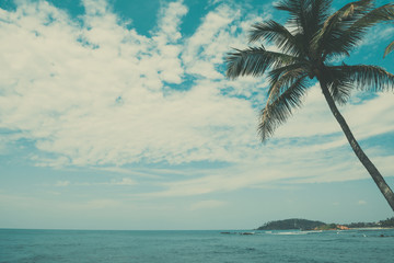 Palm tree on tropical beach, vintage toned and retro color stylized