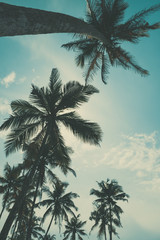 Palm trees view from the ground to the top, vintage toned and retro color stylized