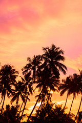 Palm trees on tropical beach at sunrise time
