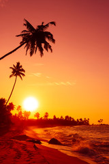 Sunset on tropical beach with big sun circle over the horizon and palm trees silhouettes