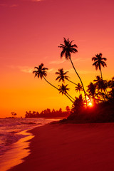 Warm vivid sunset on tropical ocean beach with palm tress silhouettes