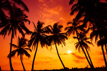 Tropical beach with palm tress silhouettes at vivid sunset
