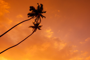 Palm trees over sunset sky