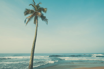 Tropical beach with one palm tree, vintage color stylized