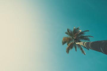 Palm tree over sky vintage color stylized