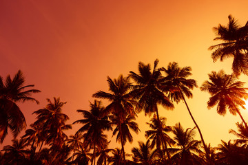 Palm trees silhouettes at summer warm sunset time