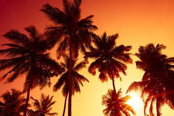 Palm trees silhouettes on tropical beach at summer warm vivid sunset time and sun circle with rays