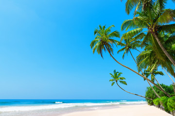 Beautiful tropical beach with coconut palm trees, idyllic clean ocean white sand and clear blue sky at sunny summer day on luxury remote resort
