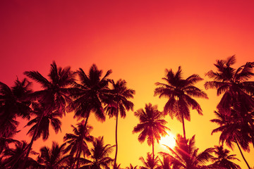 Palm trees silhouettes on tropical beach at summer warm vivid sunset time with clear sky and sun circle with rays