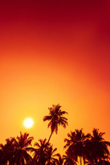 Palm trees silhouettes on tropical beach at summer warm vivid sunset time with clear sky as copy space and sun circle with rays