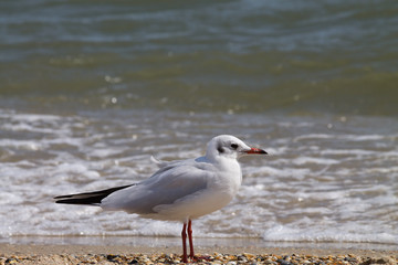 Seagull on a sandy beach closeup