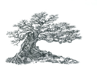 Бонсай с ветвями без листьев.