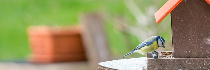 Blaumeise am Vogelhäuschen - Banner