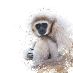 Watercolor Portrait of White-handed gibbon