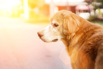 face of dog in morning ligh