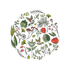 Plants and herbs background