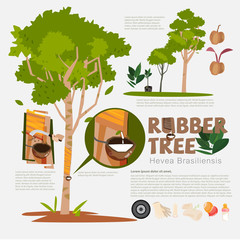 Rubber tree or Hevea brasiliensis with detail infographic elemen