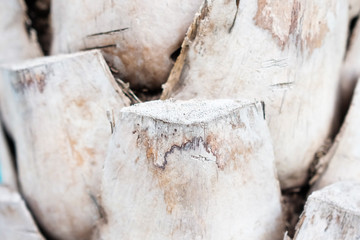 Close up Abstract tree bark background, bark photo, bark background, bark macro, forest tree, tree texture, bark texture. Skin the bark of a tree that traces cracking