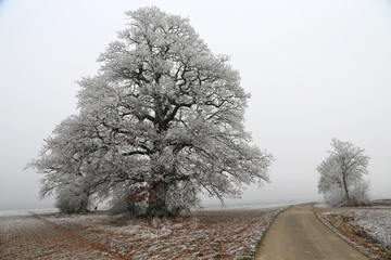 Winter landscape / Frosty morning. Trees covered with hoarfrost
