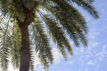 Palm tree against a blue and cloudy sky
