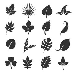 Wall Mural - Tree leaf silhouettes. Leaves vector illustration isolated on white background