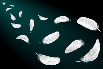 White feathers on a black background. Vector