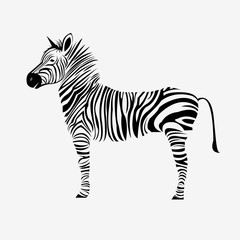 animal zebra vector illustration wild mammal white